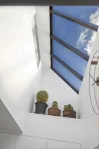 cactus raam